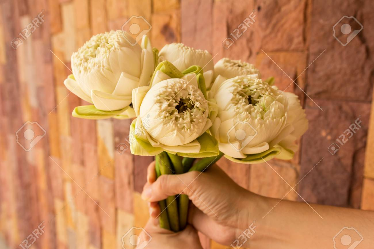 Lotus Flowers White Lotus Flowers In Woman Hands With Modern