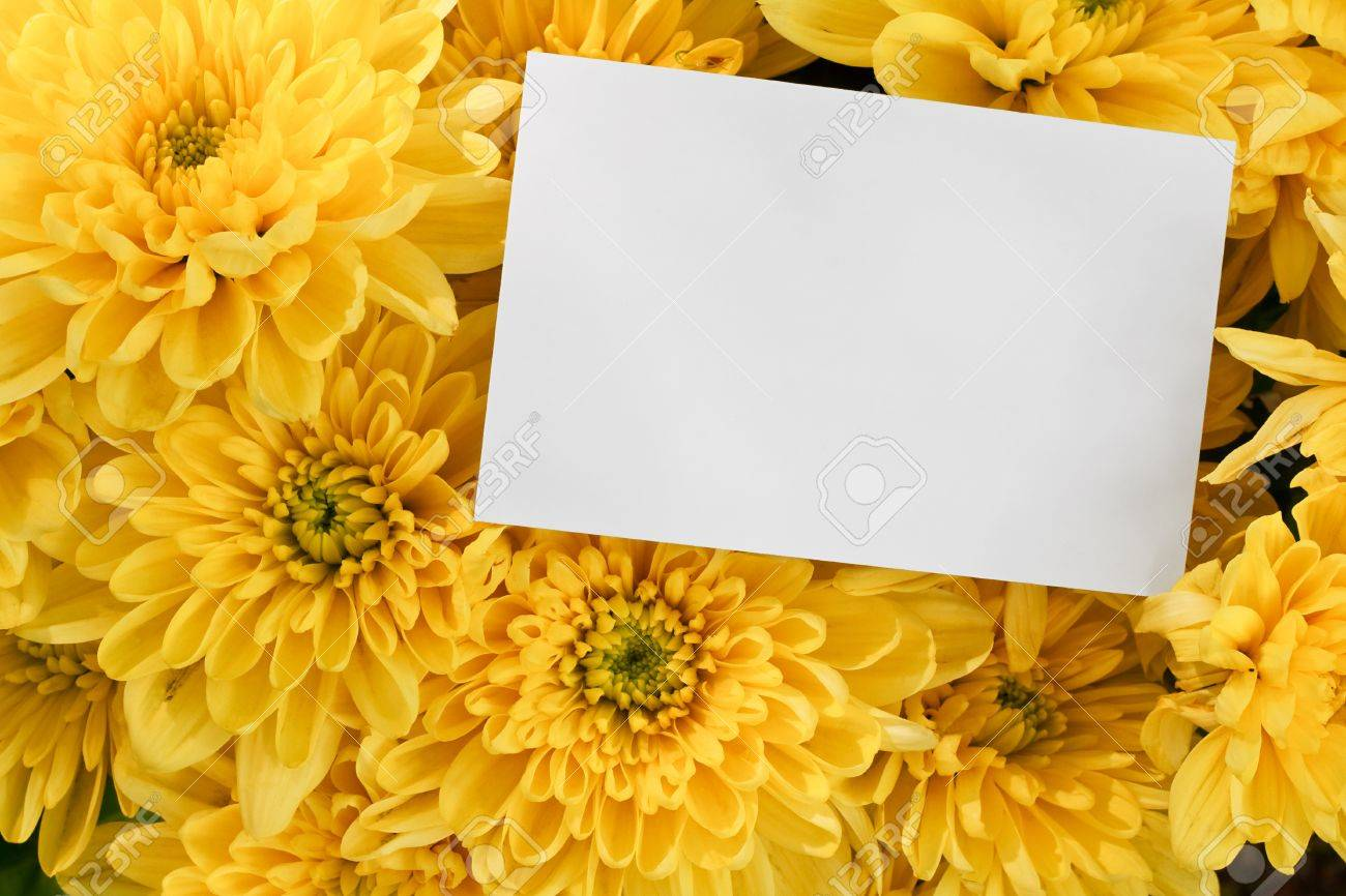 Chrysanthemum Floral Bouquet Background With Blank Greeting Card
