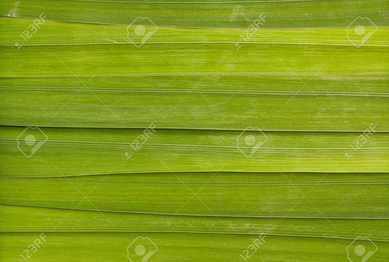 Long leaf detail background great for health spas or relaxing massage rooms Stock Photo - 20446030