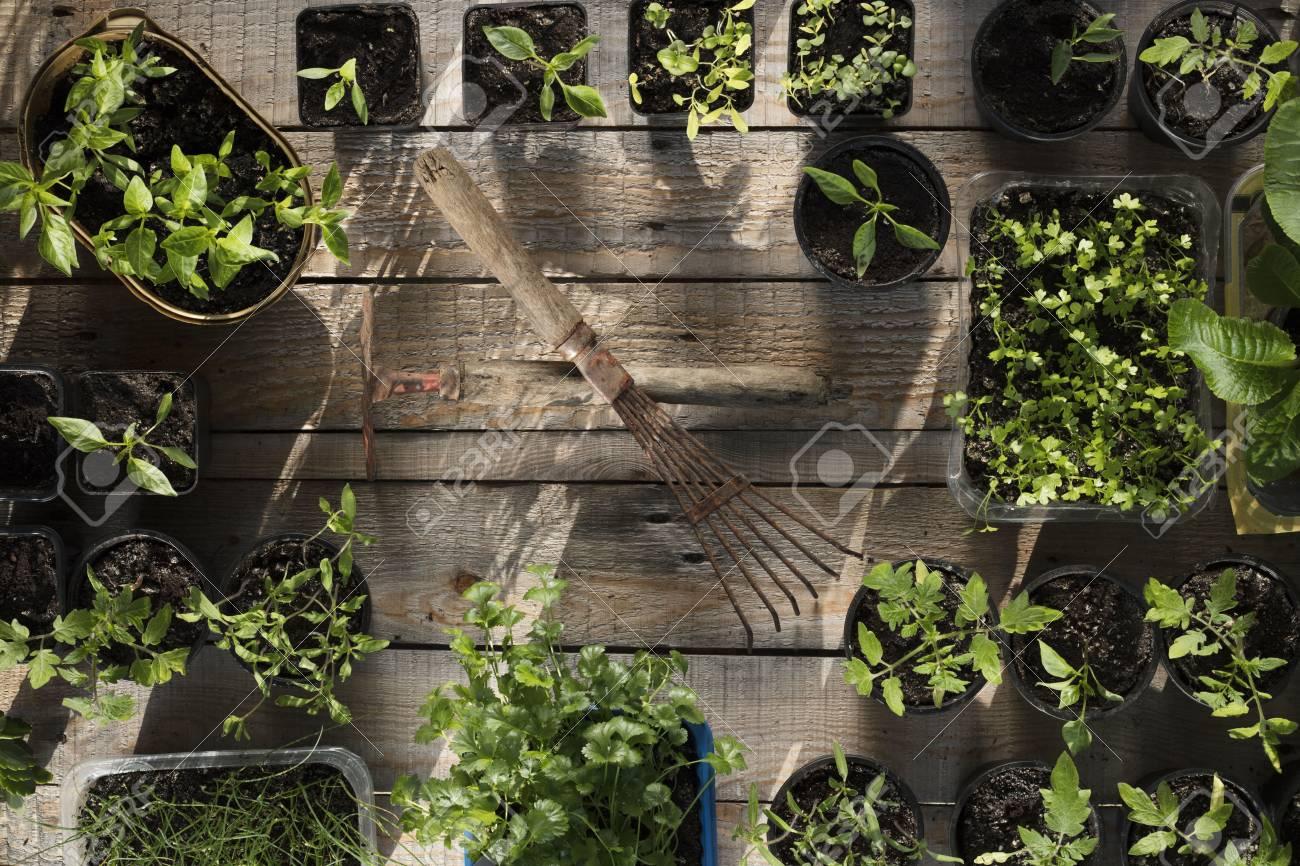 Spring Garden Works. Plants In Pots On Wooden Planks. Zdjęcia ...