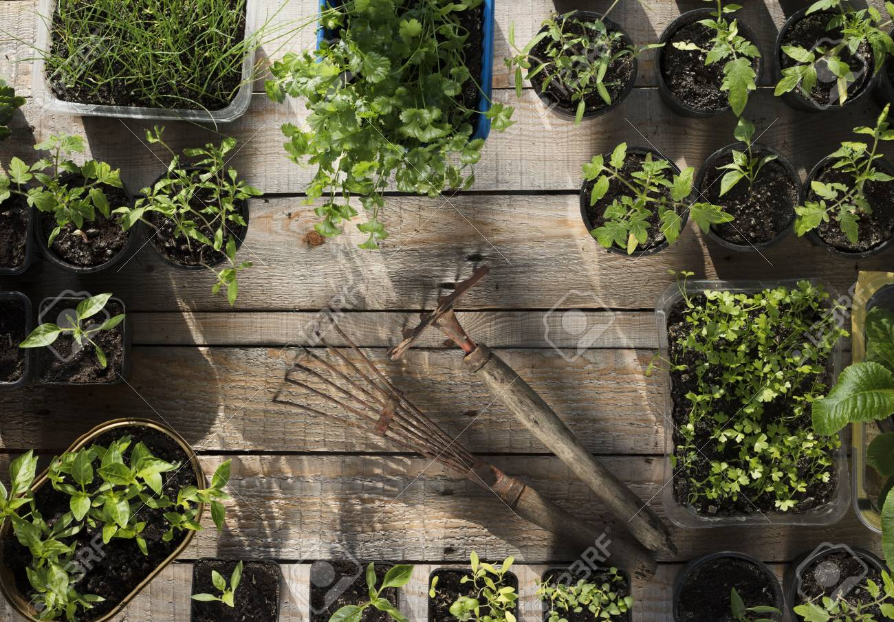 Spring Garden Works. Plants In Pots On Wooden Planks. Stock Photo ...