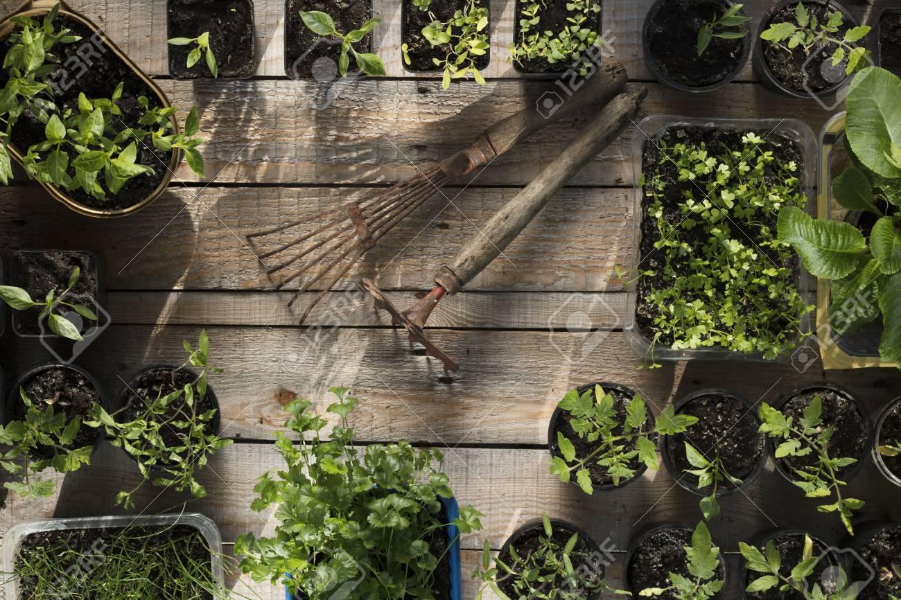 Spring Garden Works. Plants In Pots On Wooden Planks. Fotos ...