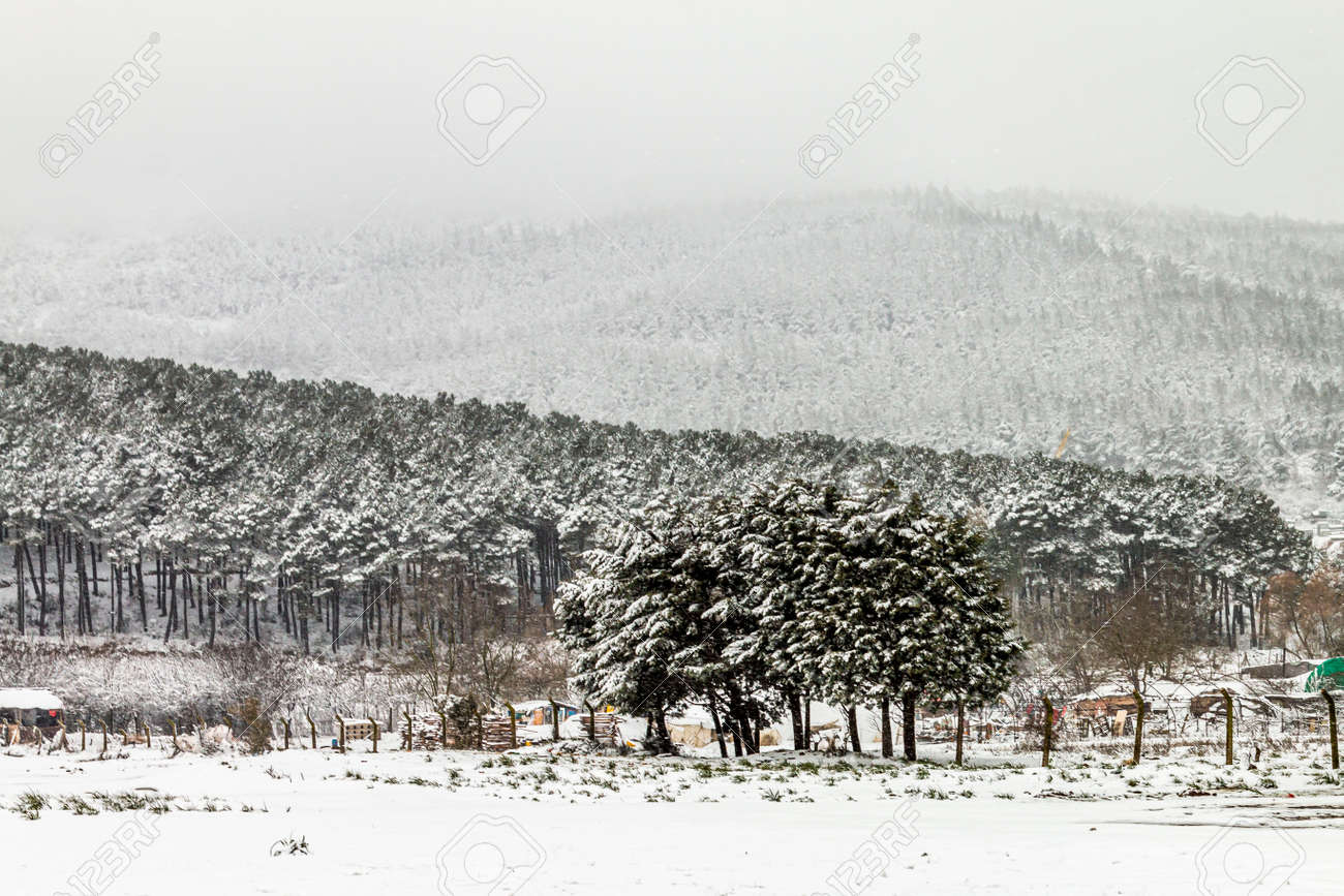 Winter fairy tale in the city park, snowy forest, white trees in the fluffy soft snow - 165693747