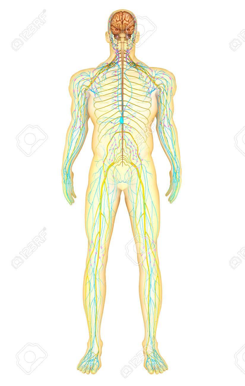 Atractivo Anatomía Del Infierno Phim Colección de Imágenes ...