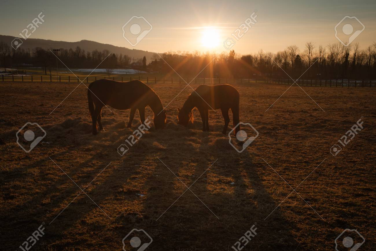Beautiful Horses Grazing At Sunset With Country Landscape Stock Photo Picture And Royalty Free Image Image 43016029