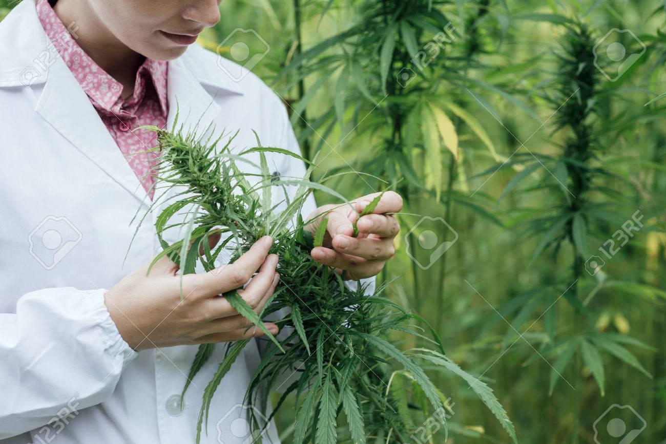 Femme scientifique dans un champ de chanvre vérifier les plantes et les fleurs, le concept de médecine de fines herbes de remplacement Banque d'images - 48740067