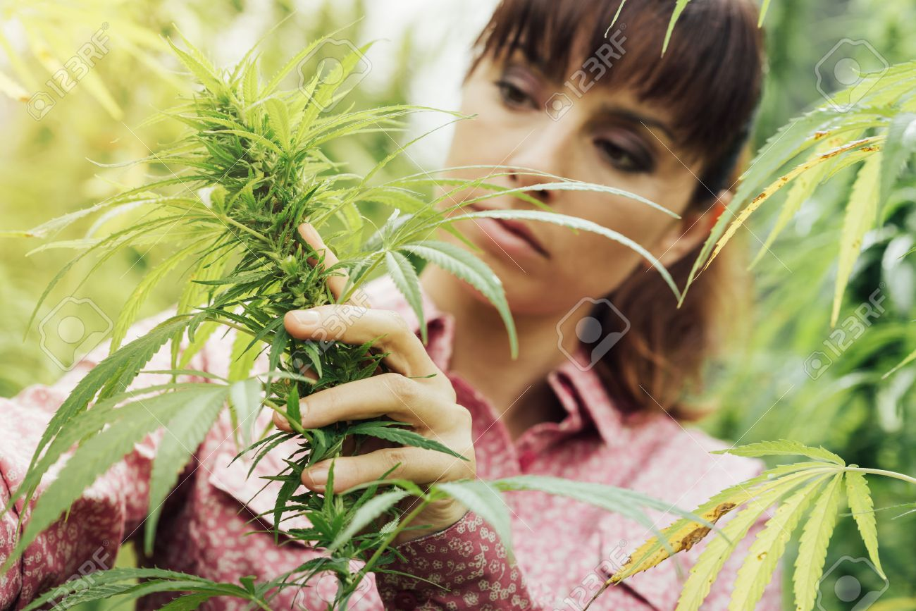 Young woman in a hemp field checking plants and flowers, agriculture and nature concept Stock Photo - 48740241