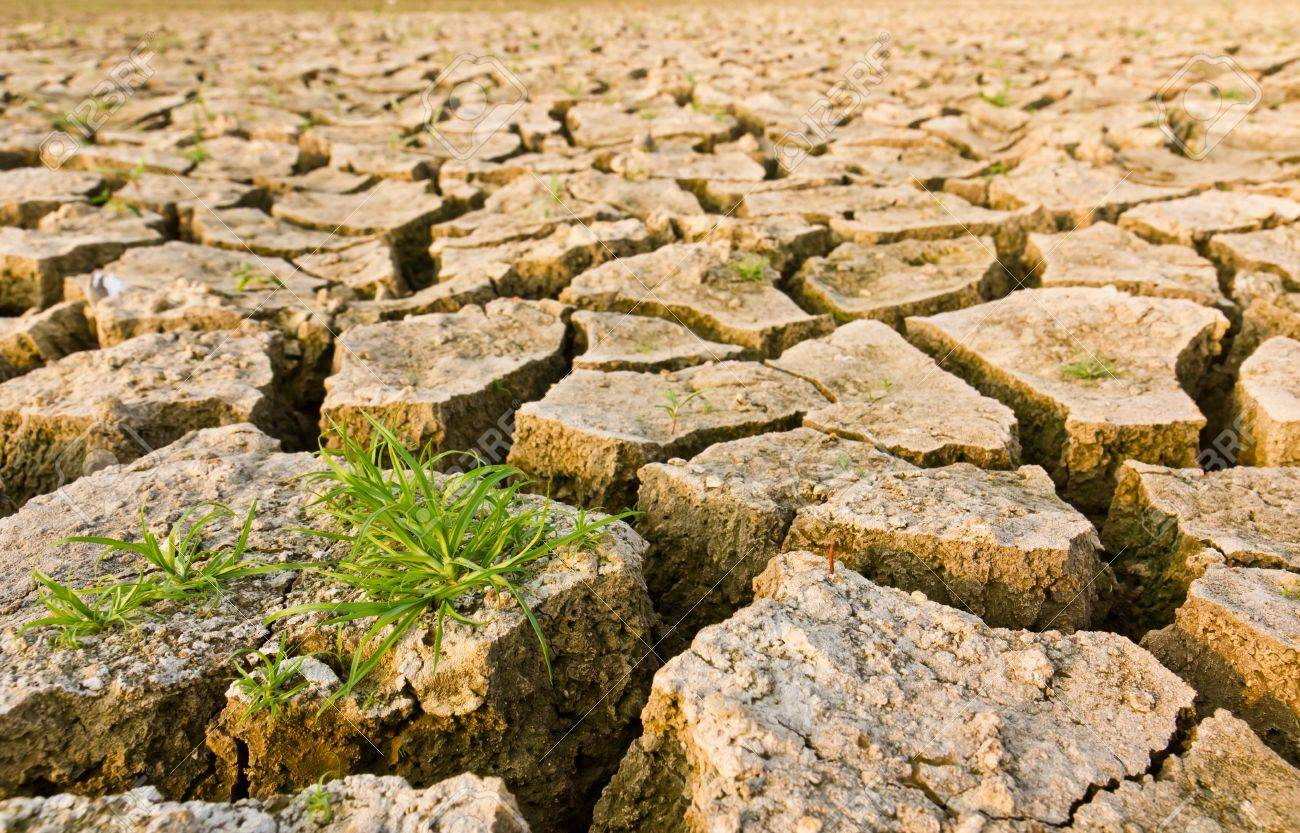 Cracked earth with grass , metaphoric for climate change and global warming. Stock Photo - 9602872
