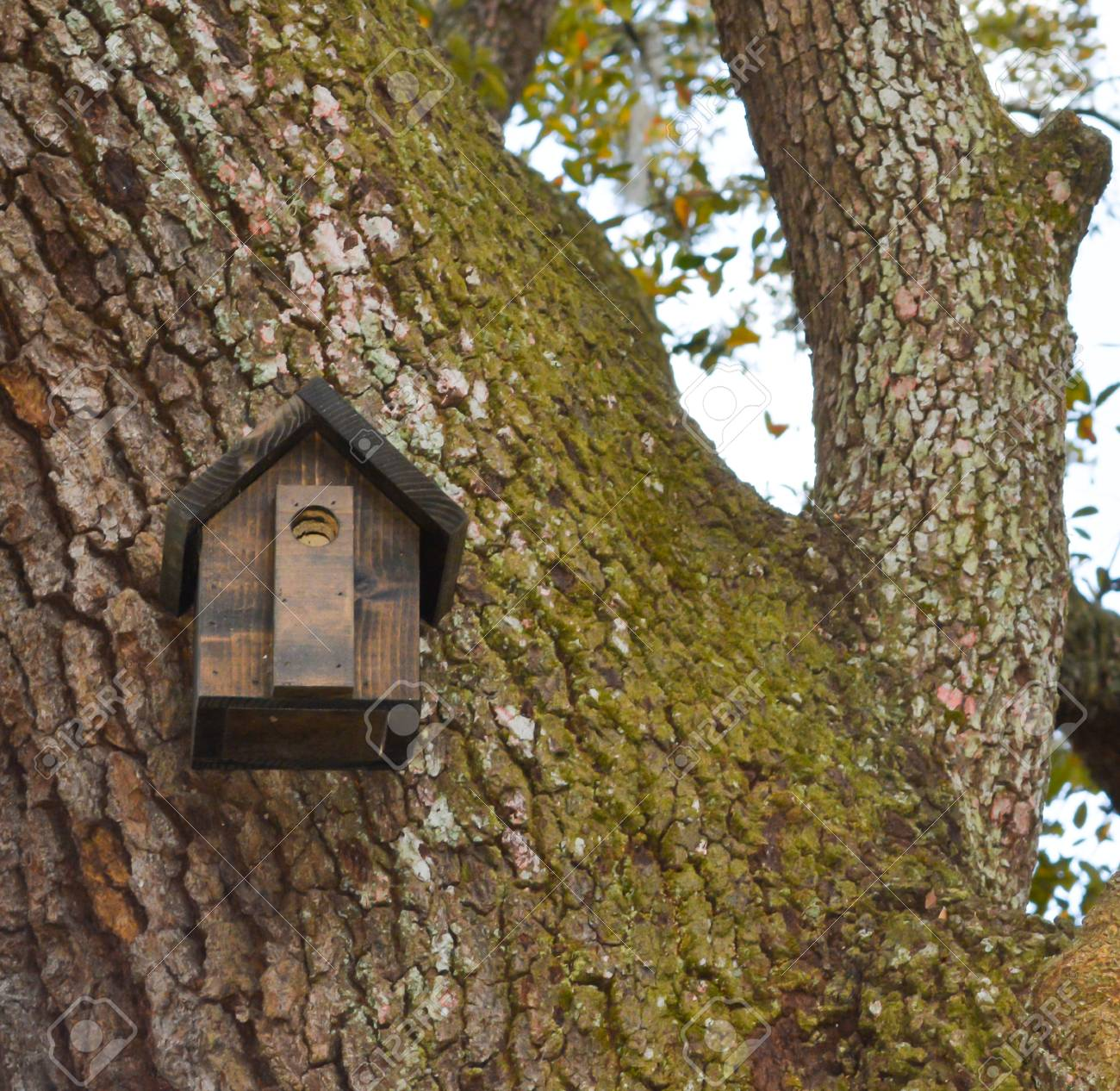 Bird House At Mead Botanical Garden In Orlando, Florida Stock Photo ...