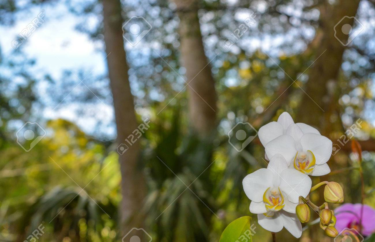 a beautiful white orchid at mead botanical garden in winter park