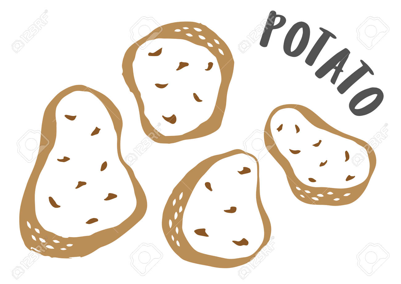 Potatoes hand painted with ink brush isolated on white background - 163562806