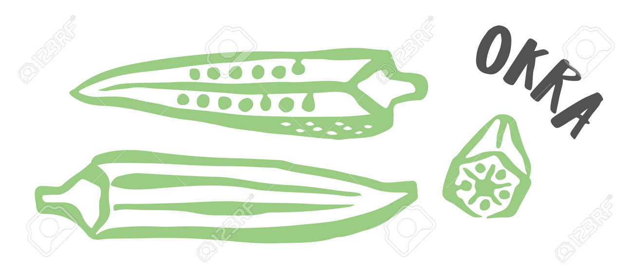 Okra hand painted with ink brush isolated on white background - 163562808