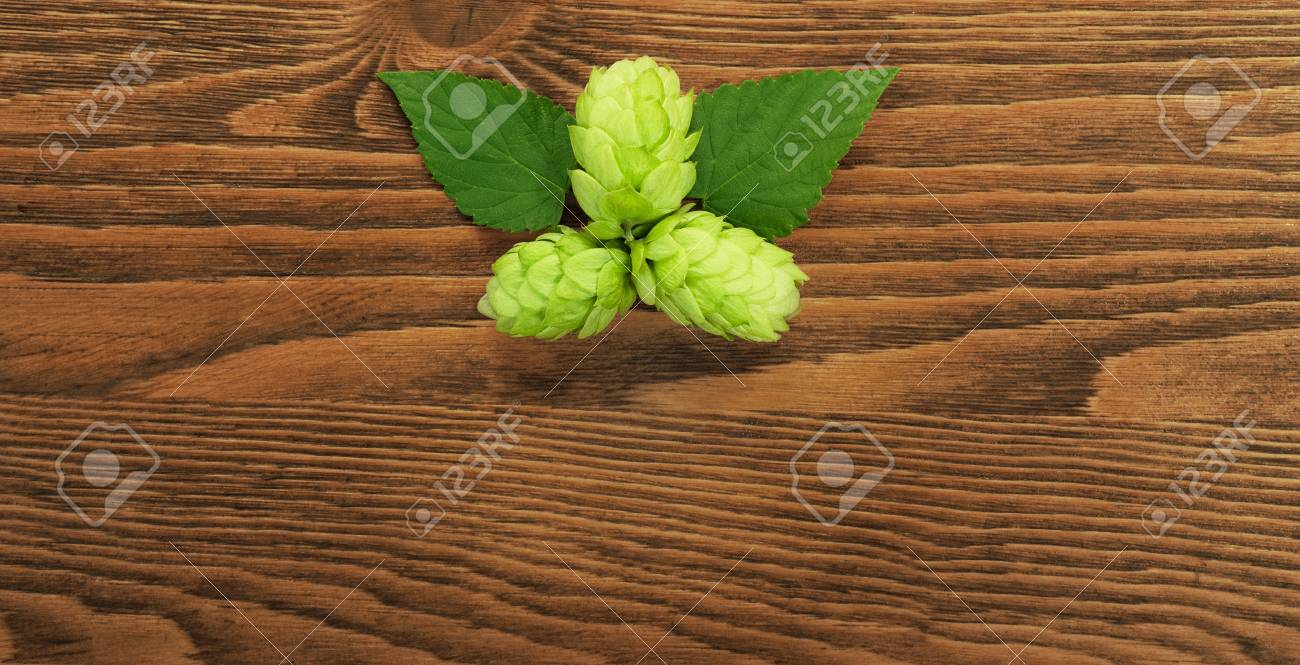 Hop plant on a wooden table Stock Photo - 17387182