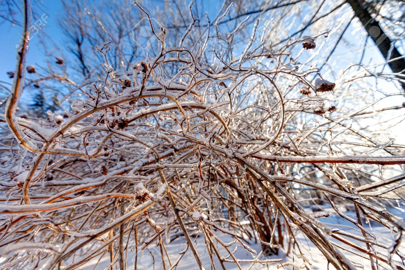 Icy landscape Stock Photo - 18686738