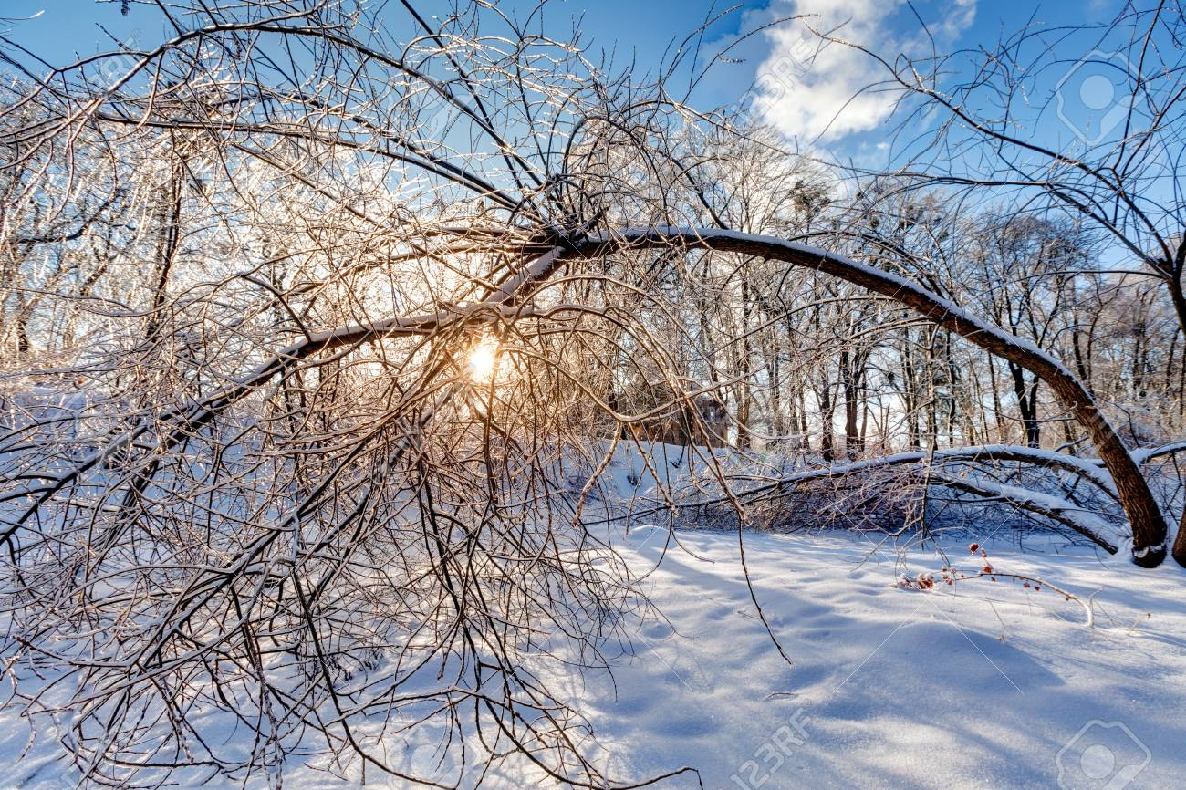 Icy landscape Stock Photo - 18686768