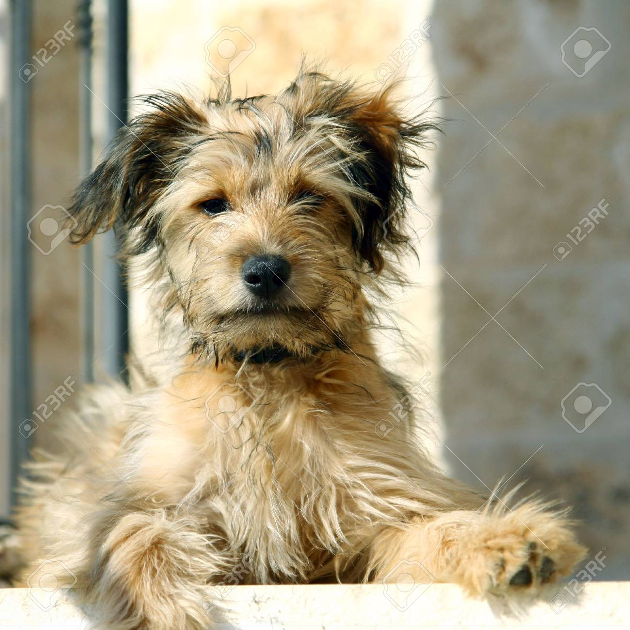 sitting on stairs dog Stock Photo - 1194905
