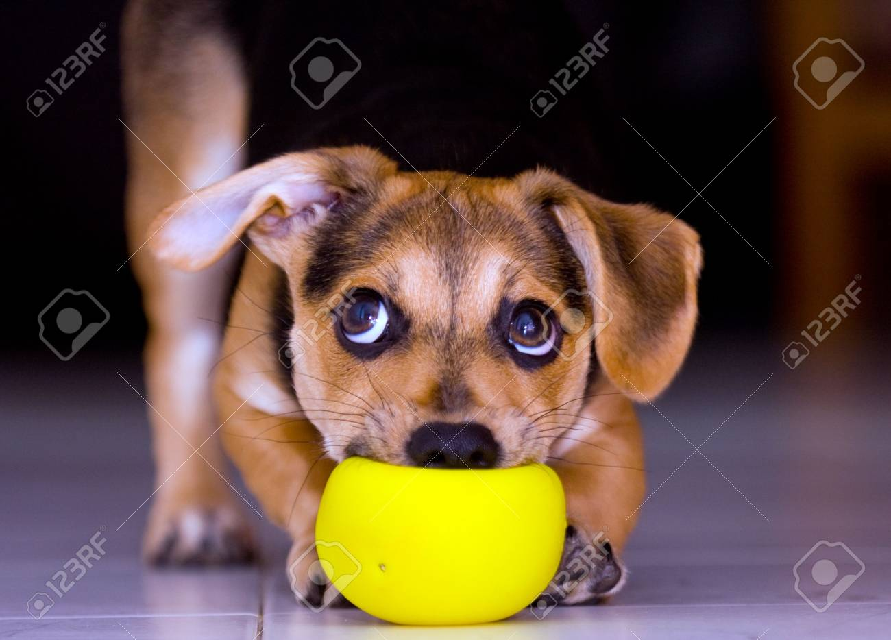 playing puppy - 3260592