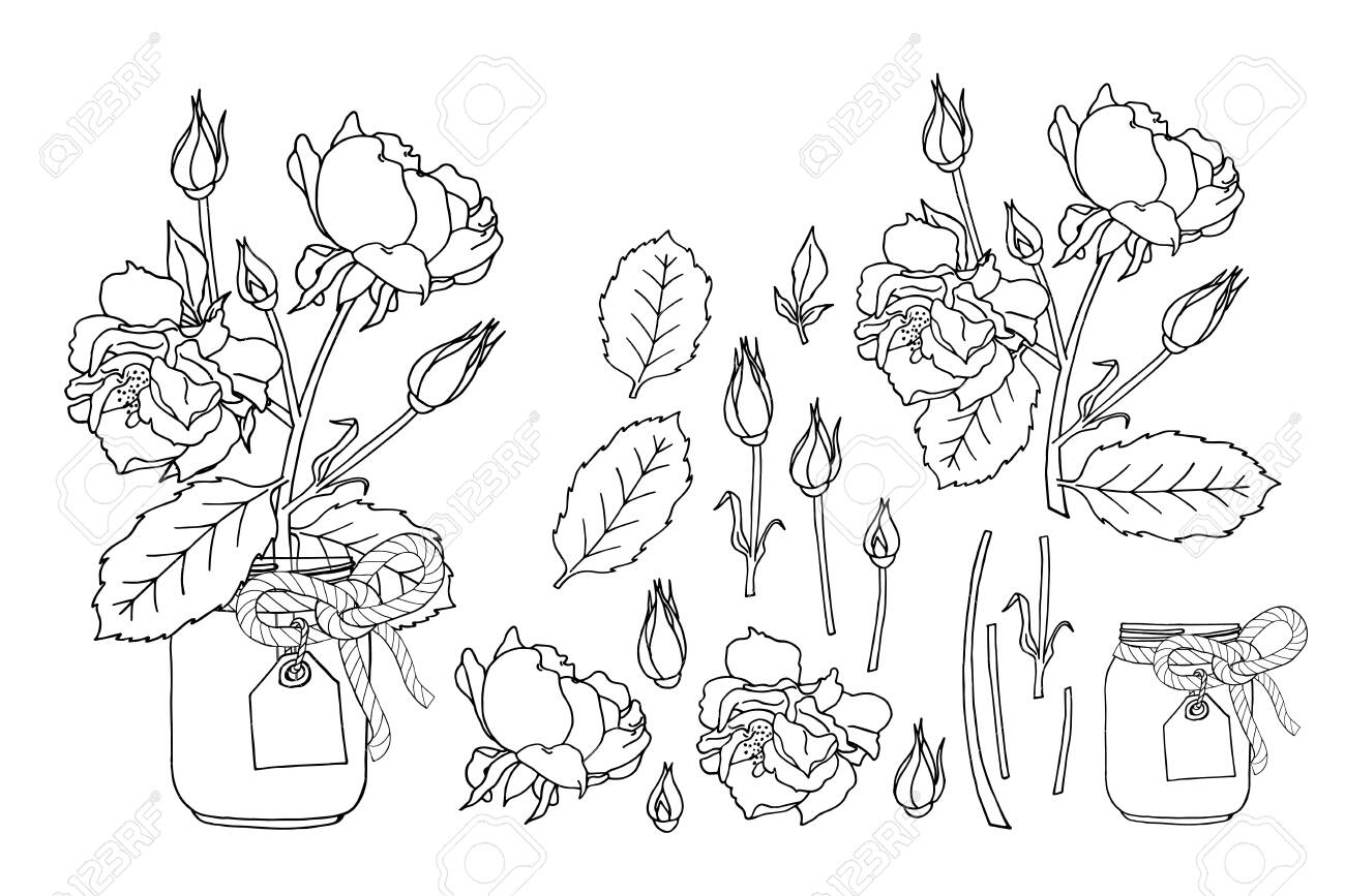 Hand drawn rose flowers in mason jar clipart monochrome set. Floral design element. Isolated on white background. Vector illustration. - 151085544