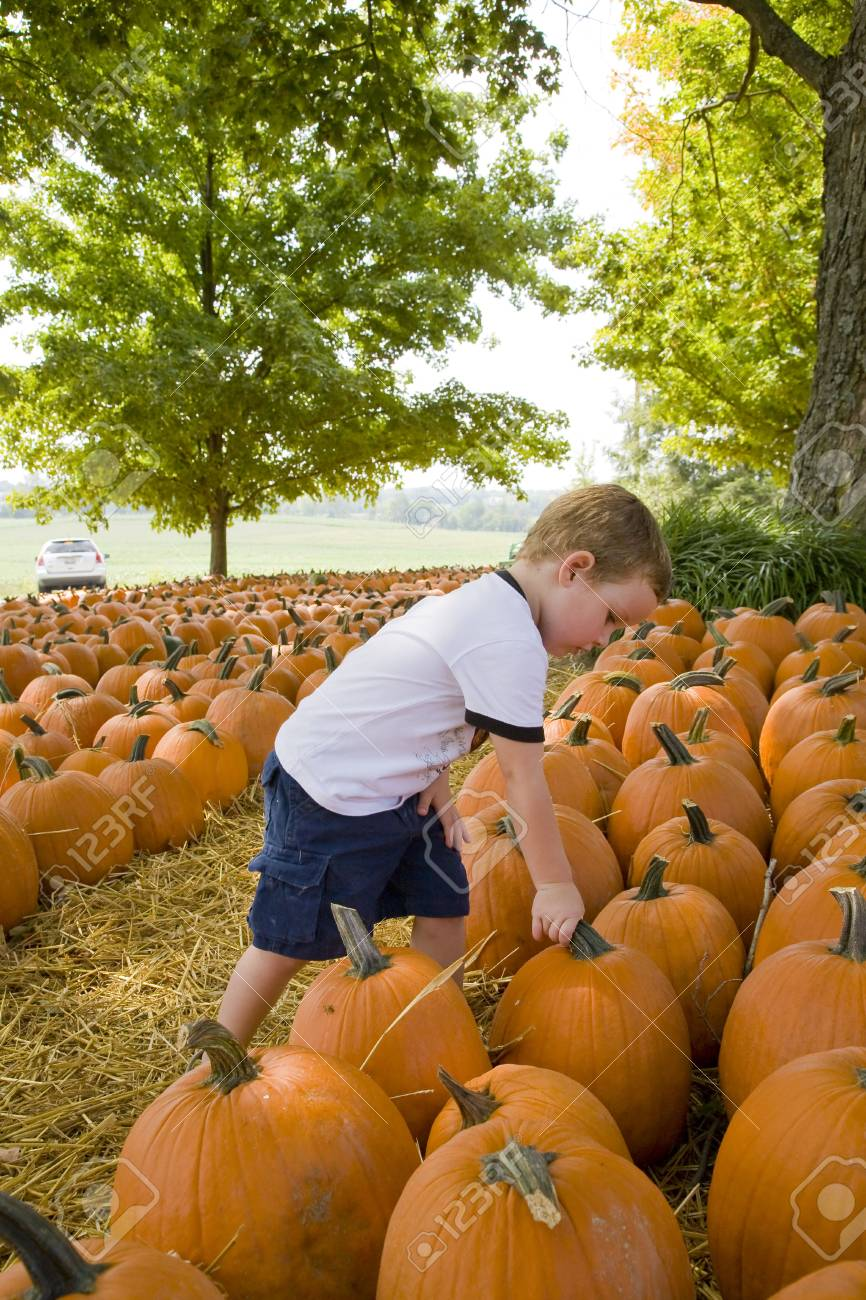 Child looking for the perfect pumkin to take home Stock Photo - 3604032