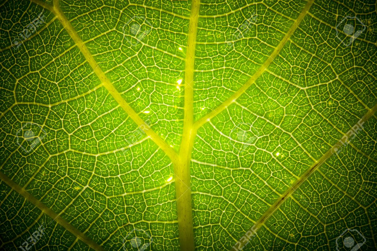 Texture leaf on clearance. tinted - 35190555