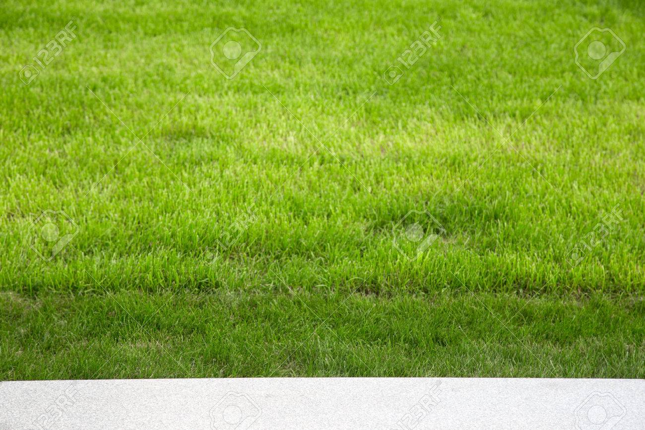 Green grass on the lawn. Selective focus. Shallow depth of field. - 45233184