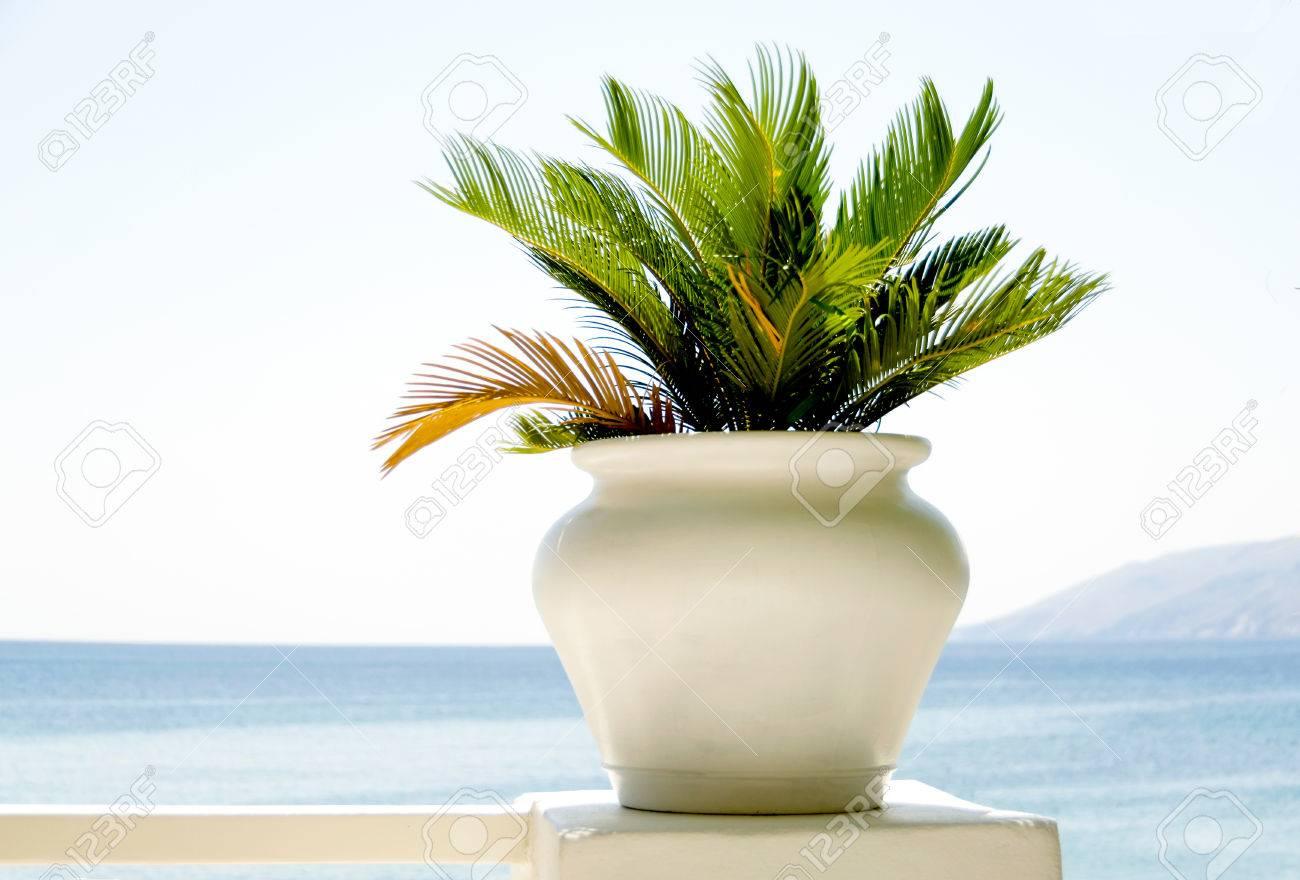 Boom In Pot Op Balkon.Witte Pot Met Alg Plant Op Balkon Het Oog Op De Egeische Zee