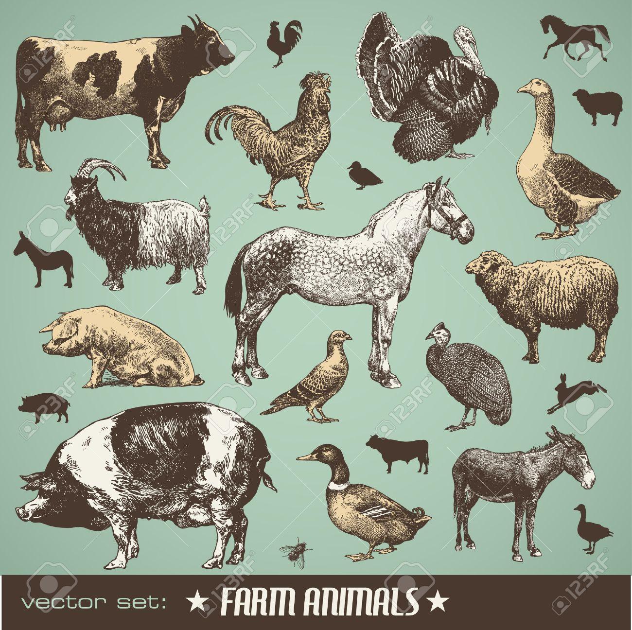 set: farm animals - stt of various retro illustrations - 7051529