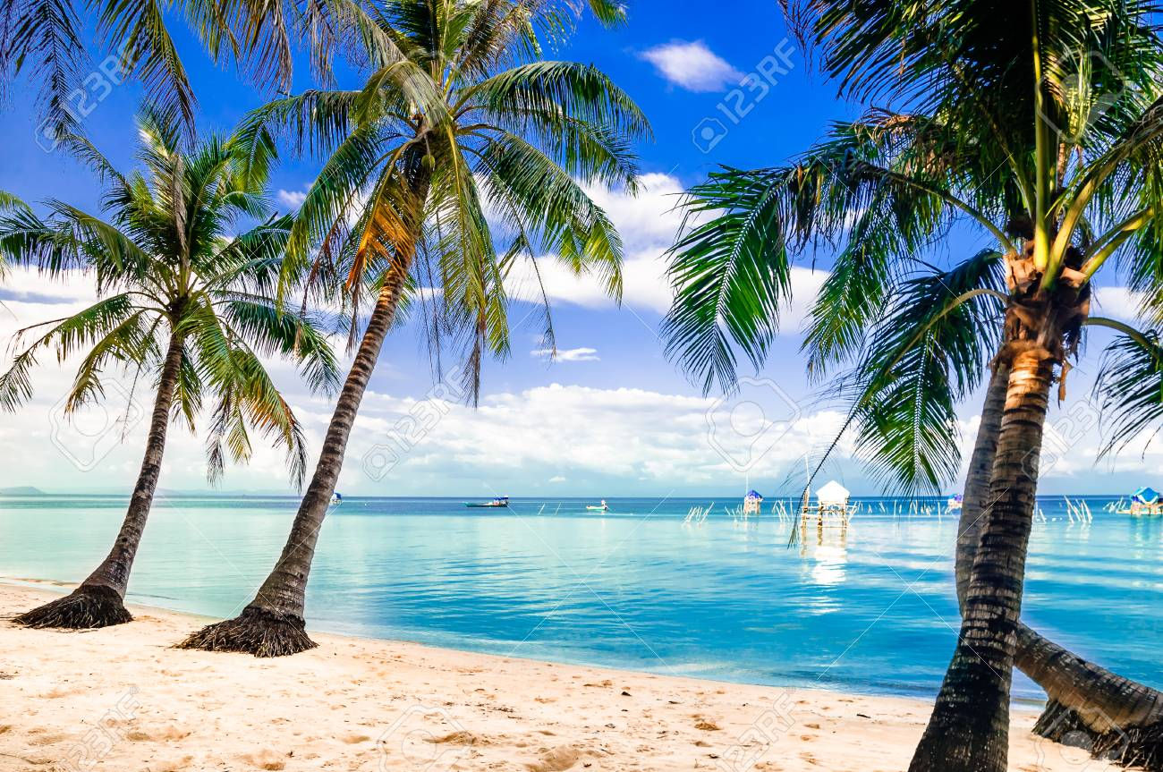 View on turquoise palm beach by Phu quoc island in Vietnam - 77666532