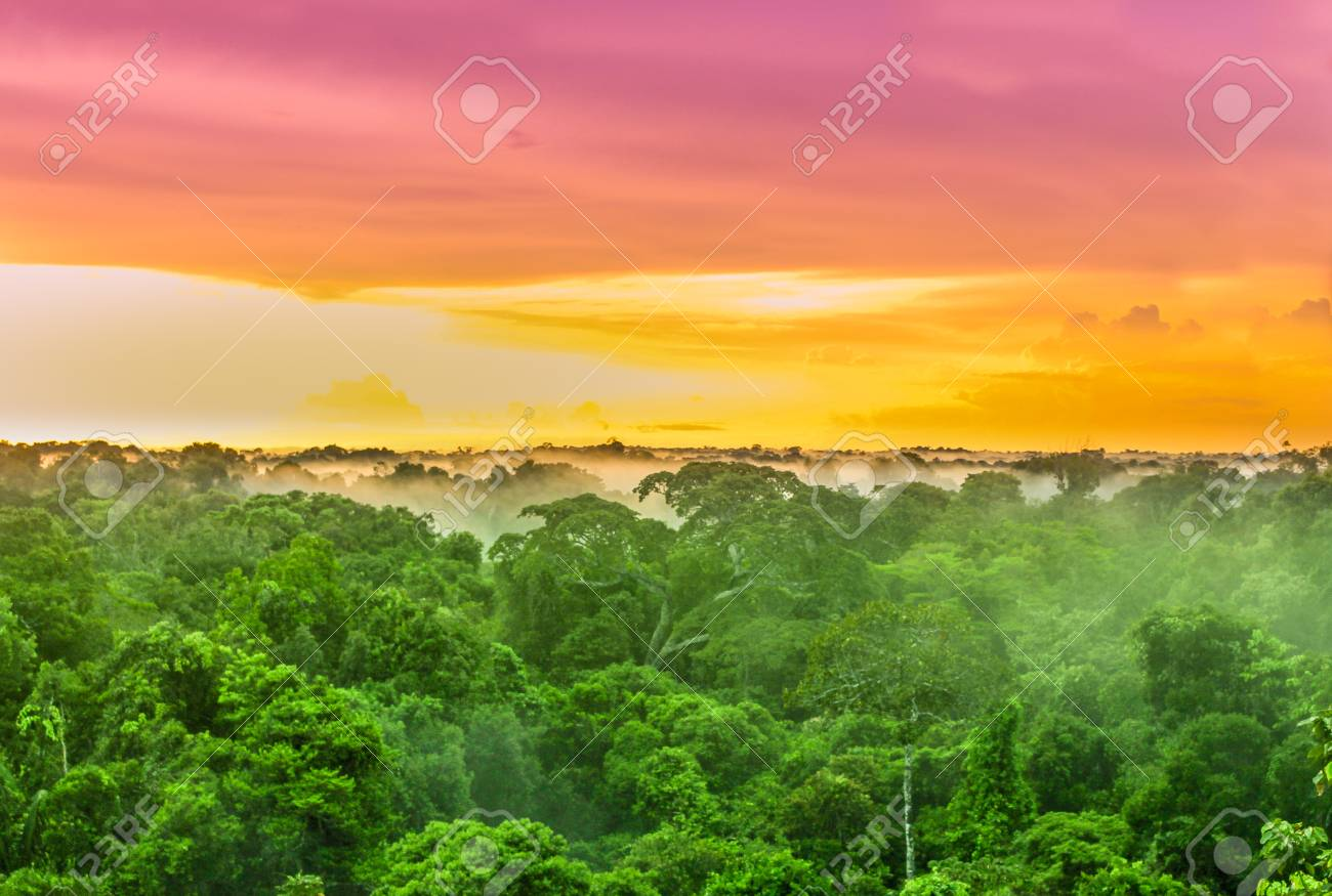 View on Purple sunset over rainforest trees in Brazil - 87484986