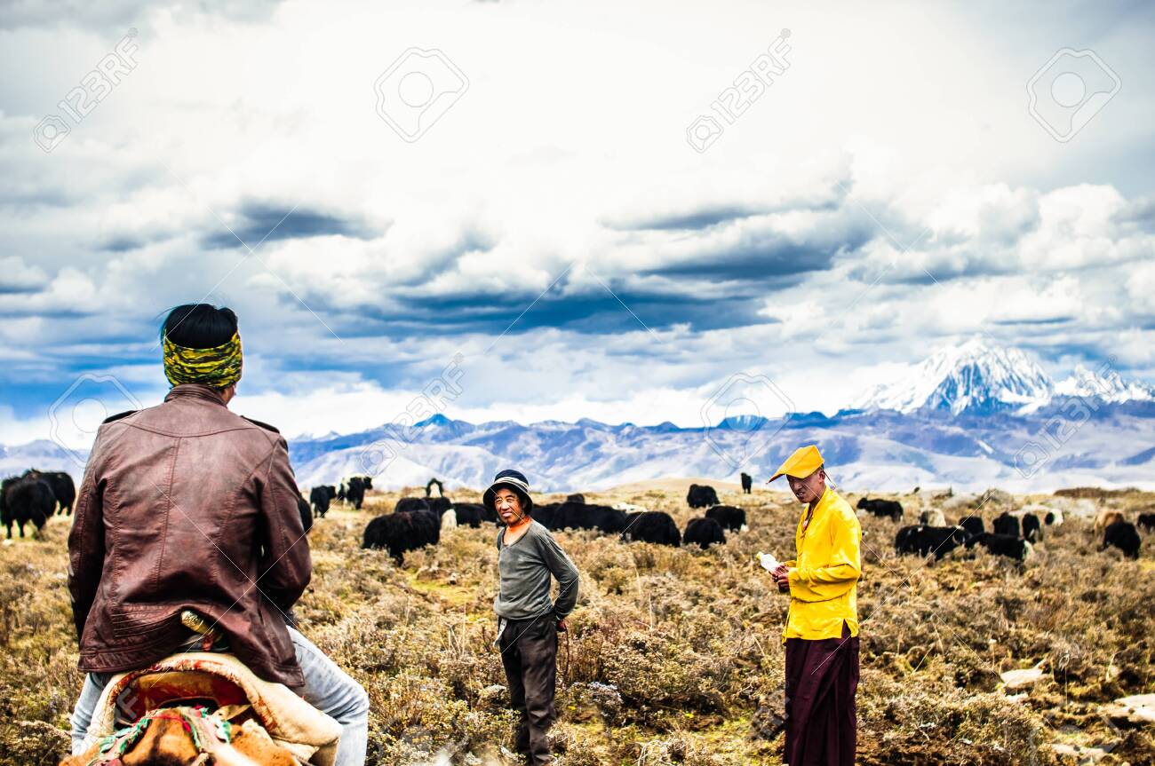 Tagong grassland, China on 12th May 2015 - Tibetan nomads and Yak cattles - 142308252