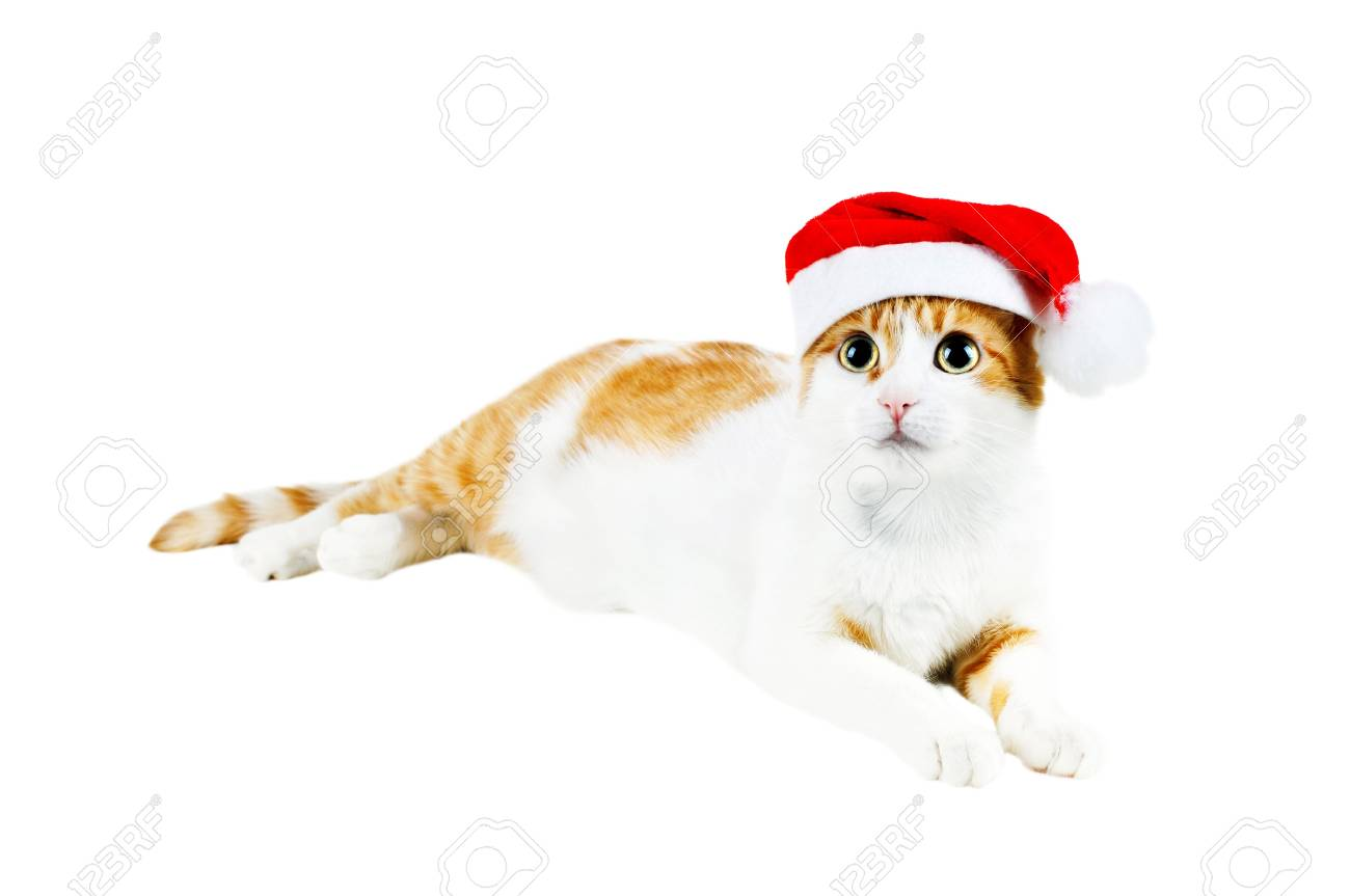 cute red and white cat in santa's hat isolated Stock Photo - 8419688