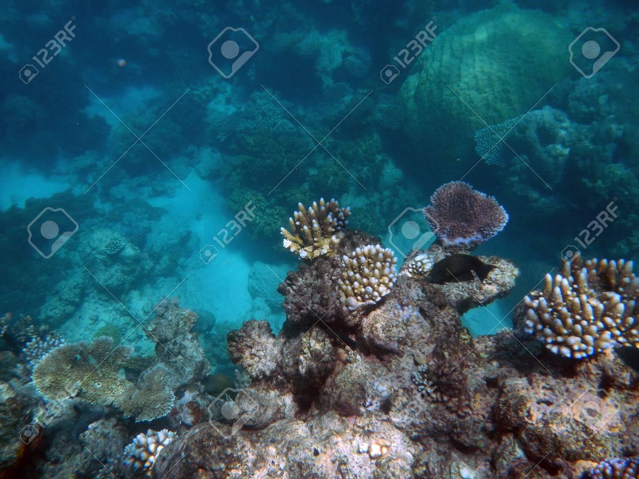 Snorkeling on the Great Barrier Reef, Australia - 122092441