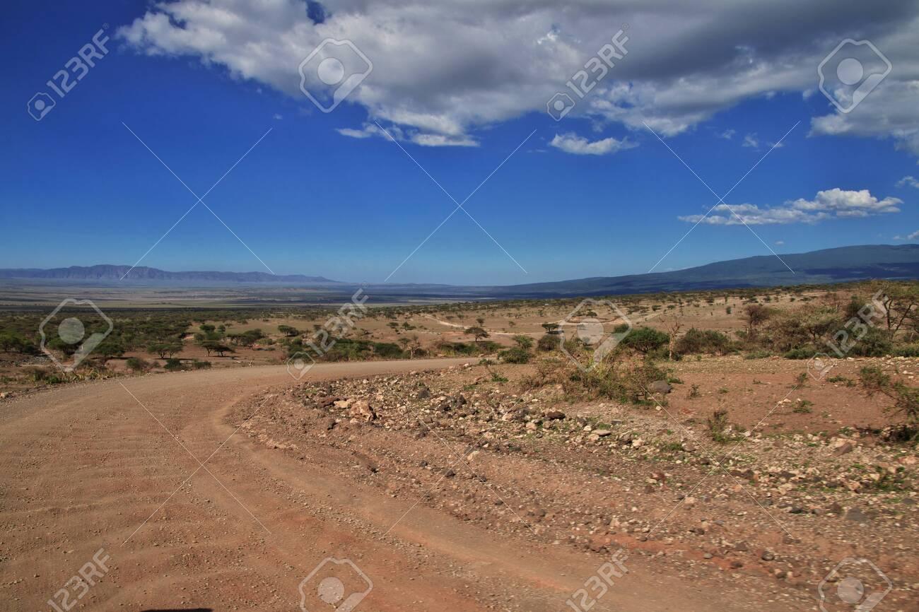 Road on savanna in Kenia and Tanzania, Africa - 124139695