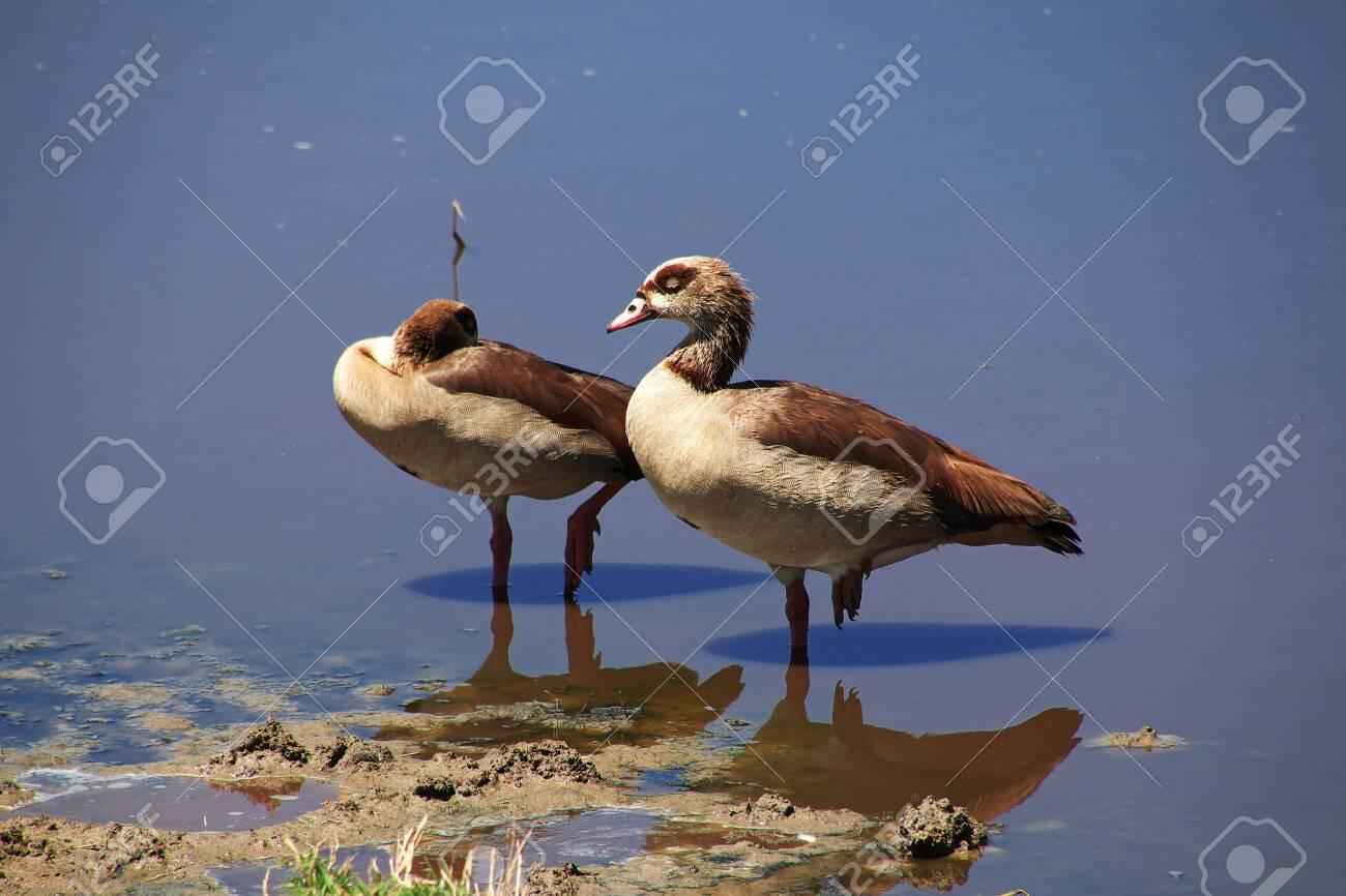 Bird on safari in Kenia and Tanzania, Africa - 124478235