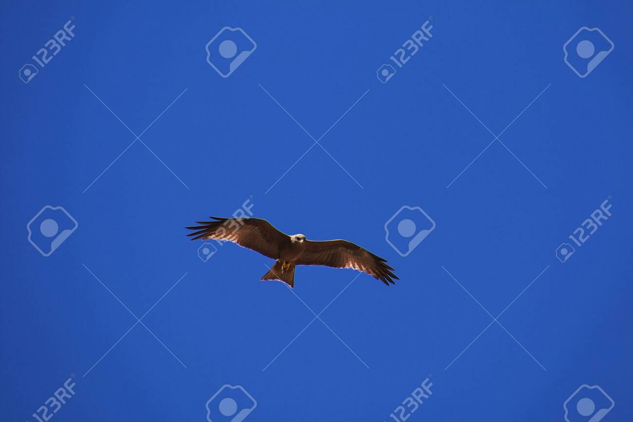 Eagle on safari in Kenia and Tanzania, Africa - 124323922