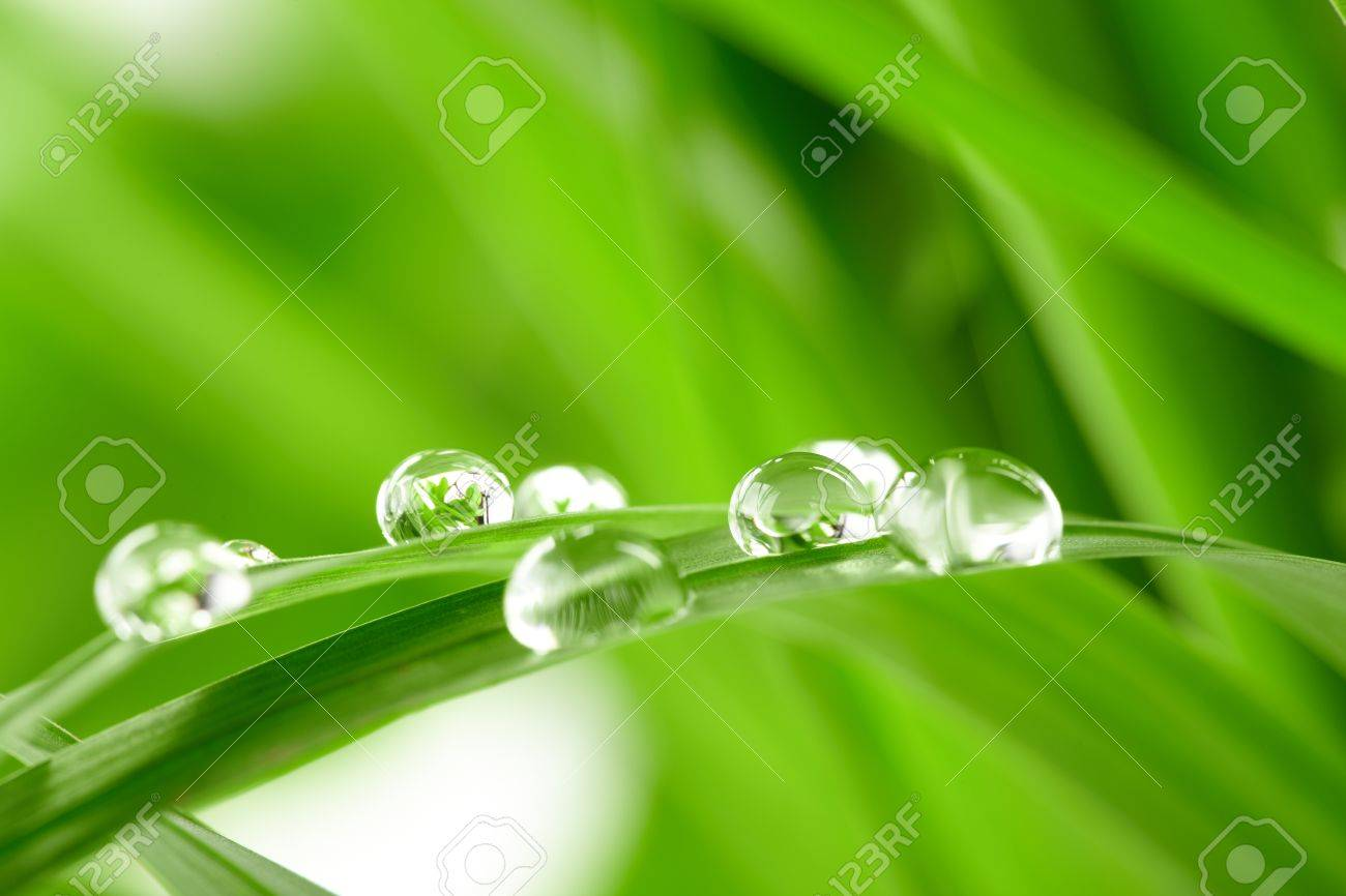 water drops on the green grass Stock Photo - 9600544