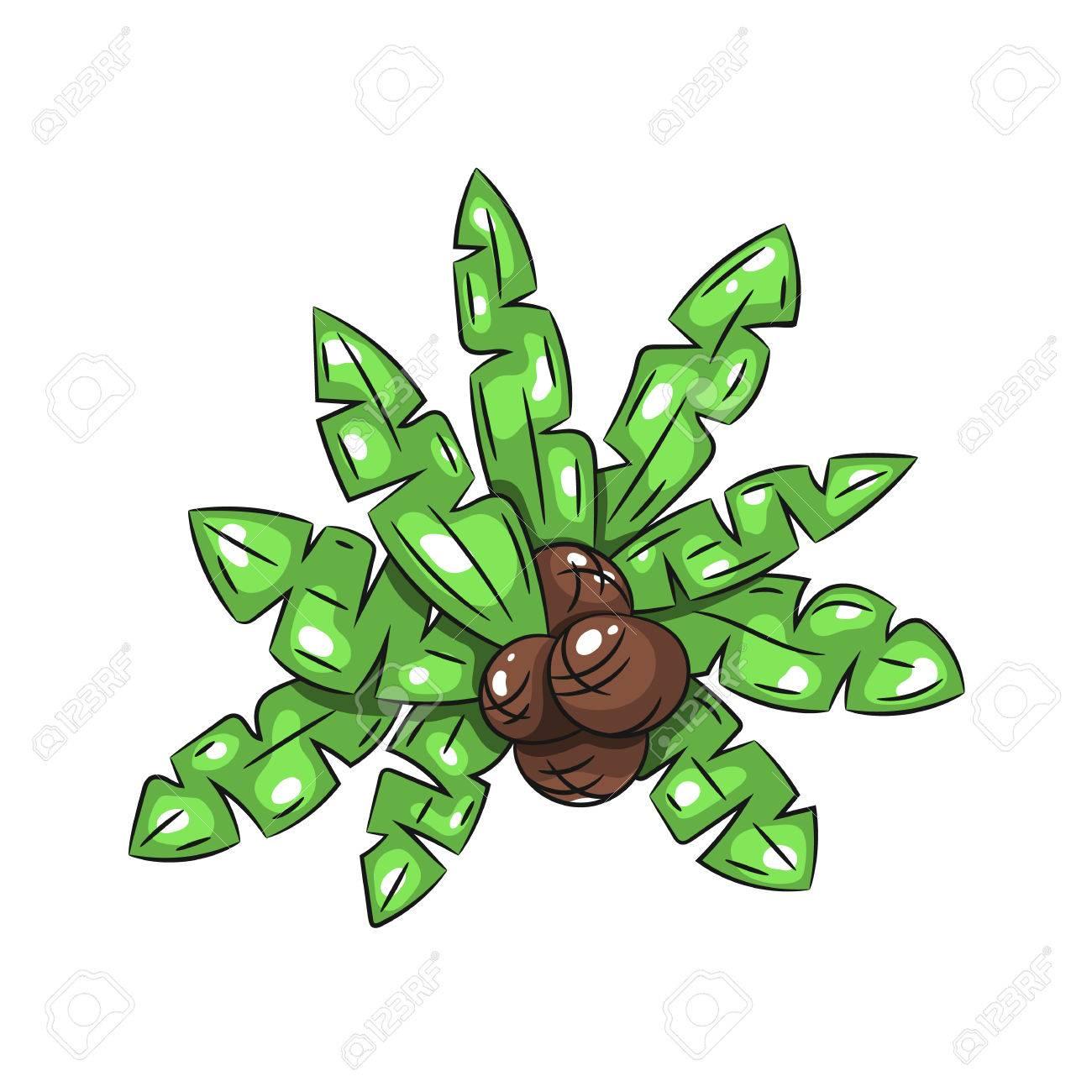 Palmblätter Mit Kokosnüssen Auf Einem Weißen Hintergrund. Hand ...