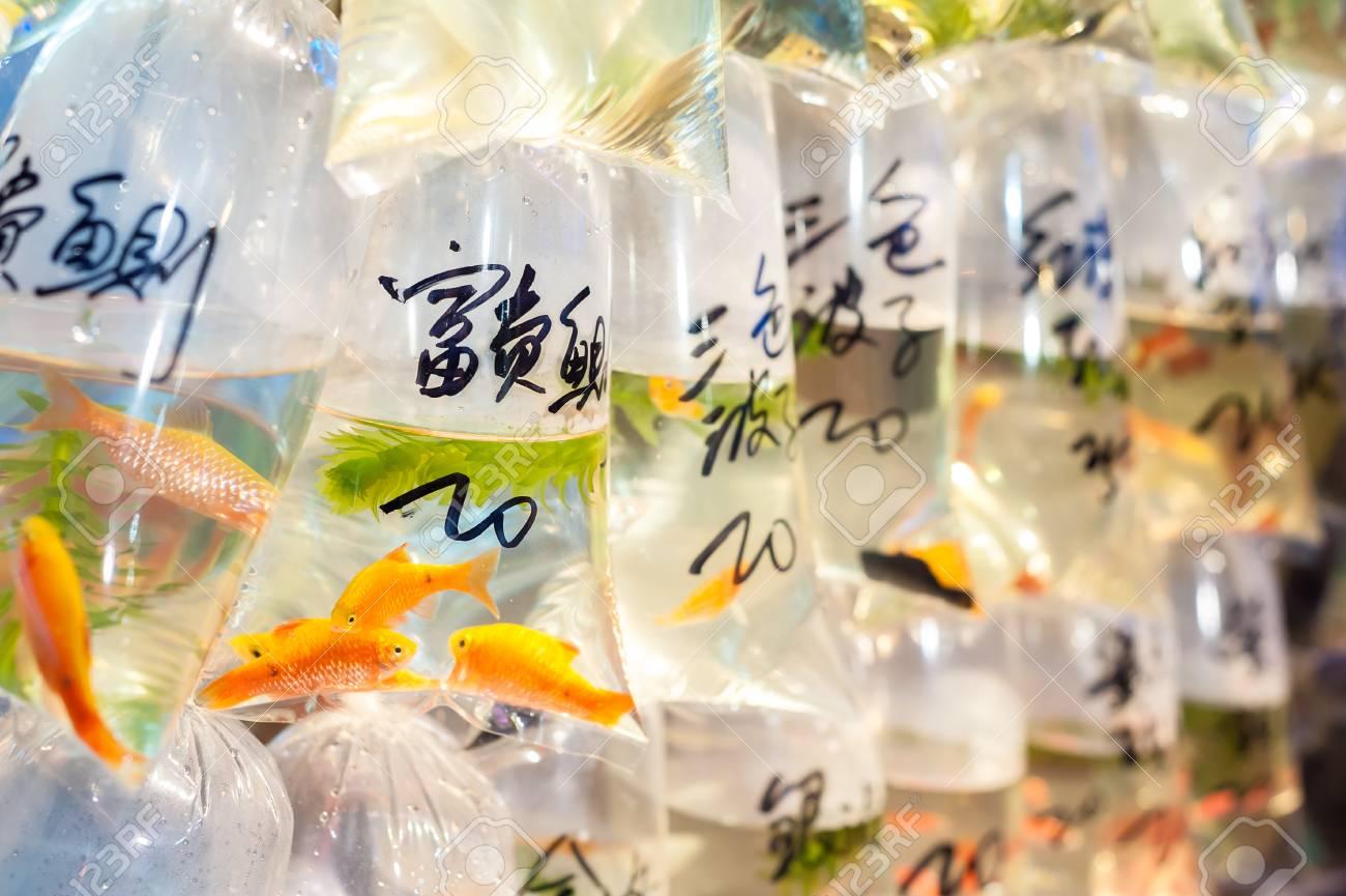Tropical fish for sale at Hong Kong's Tung Choi Street goldfish