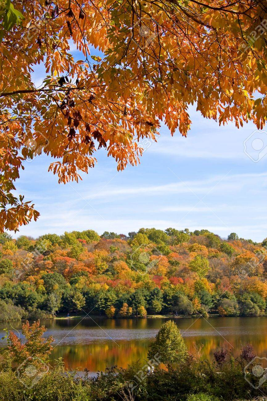 Scenic scene with autumn trees set against a wooded lake Stock Photo - 3732936