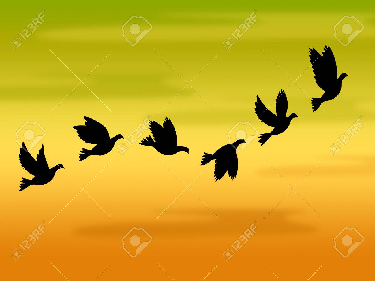 Flying Birds Meaning Summer Time And Warmth
