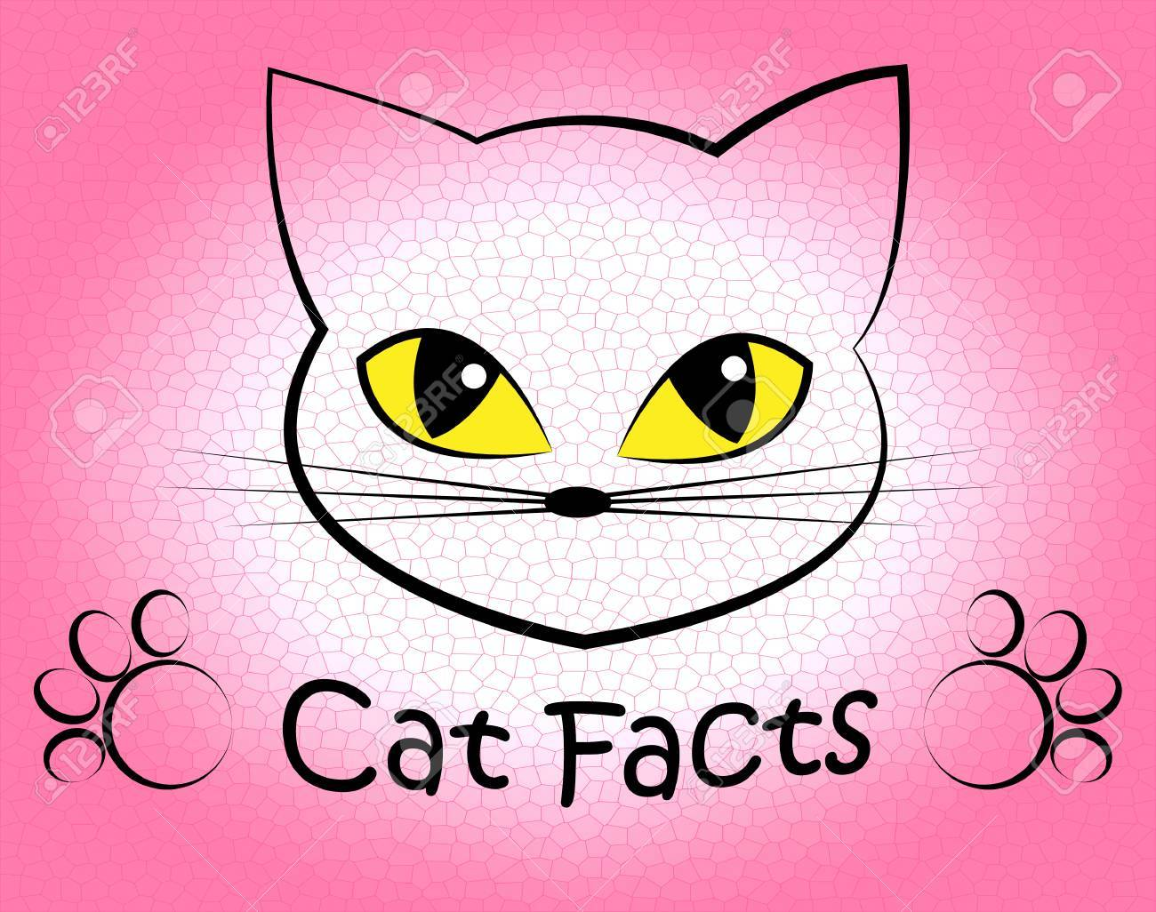 cat facts representing truth info and feline stock photo picture