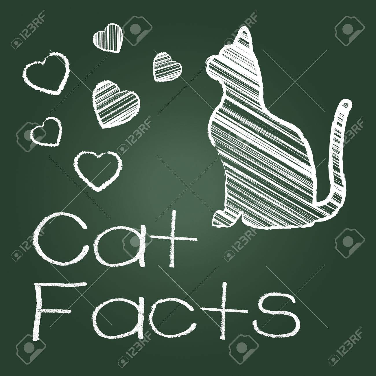 cat facts representing cats knowledge and feline stock photo