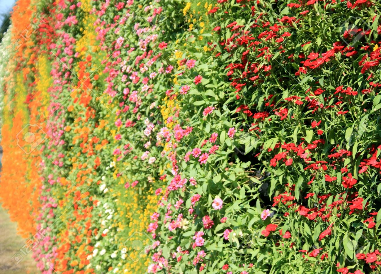 Flower Wall Vertical Garden