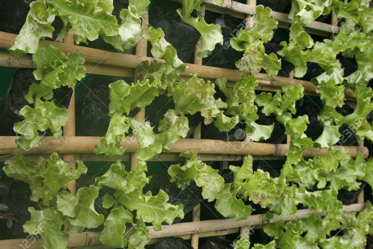 vertikale garten anlegen – sirube, Garten ideen gestaltung