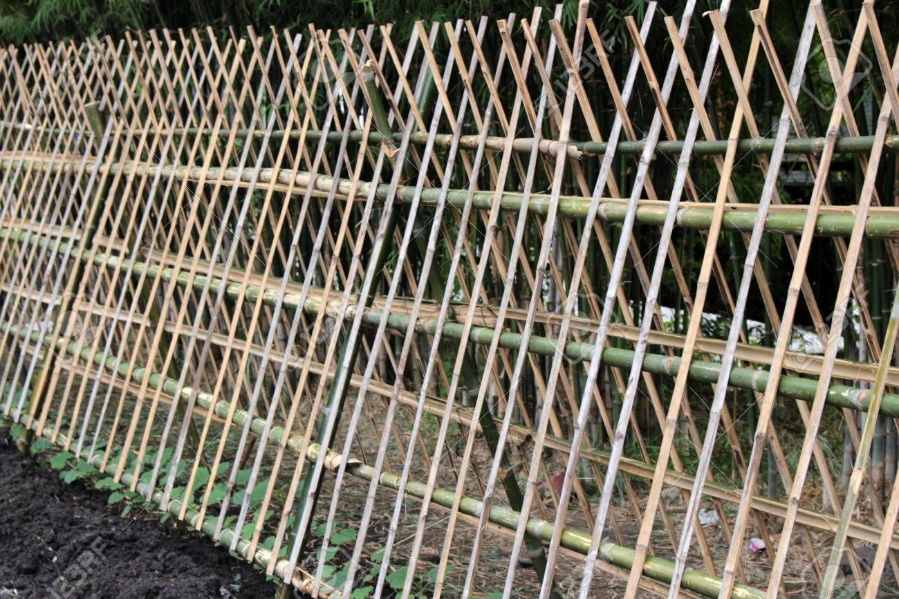 efeu pflanzengärtnerei bambuszaun lizenzfreie fotos, bilder und