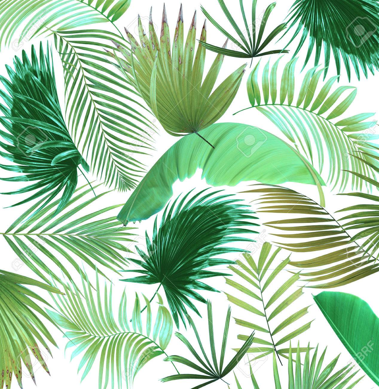 Mix Palm Leaf Tree Background Stock Photo Picture And Royalty Free Image Image 64474630