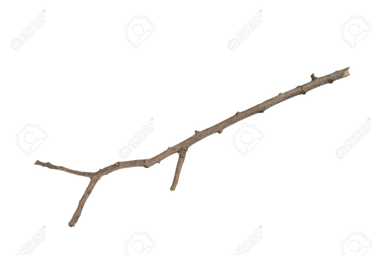 Branch Stick Or Twigs Isolated On White Background Stock Photo Picture And Royalty Free Image Image 58882171