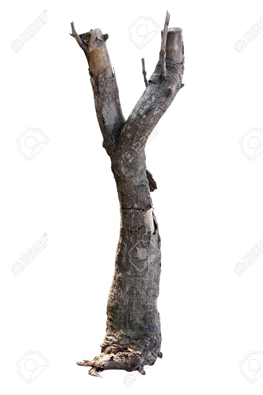 morceau de branche d'arbre sec sur fond blanc, vieux bois, bois pour