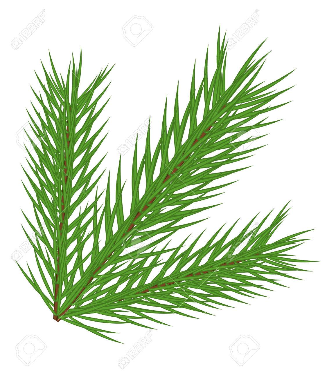 fir branch isolated Stock Vector - 8069084