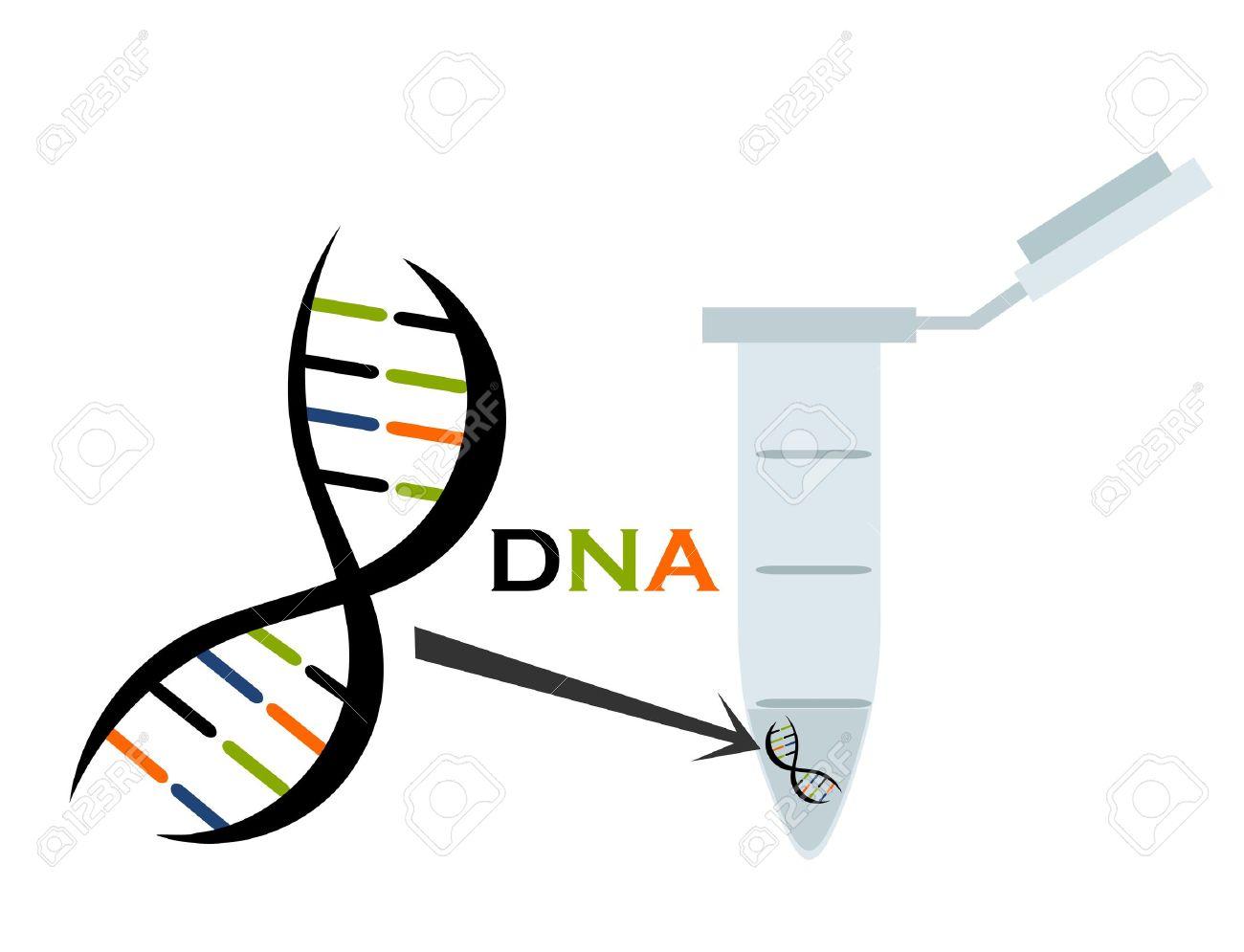 DNA in test tube eppendorf. Molecular biology science. Vector illustration Stock Vector - 9838270